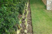 Soft Landscaping_planting-40