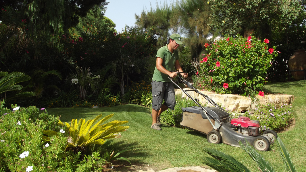 Garden maintenance pruning trimming irrigation lawn for Basic garden maintenance